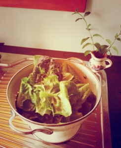 garden-2014-lettuce-salad