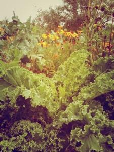 garden-kale
